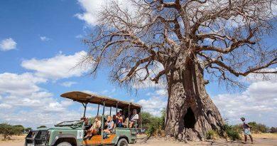Visiter la Tanzanie : Safari, excursion