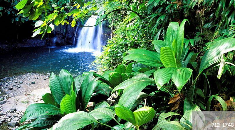 Guadeloupe: saut de la Lézarde