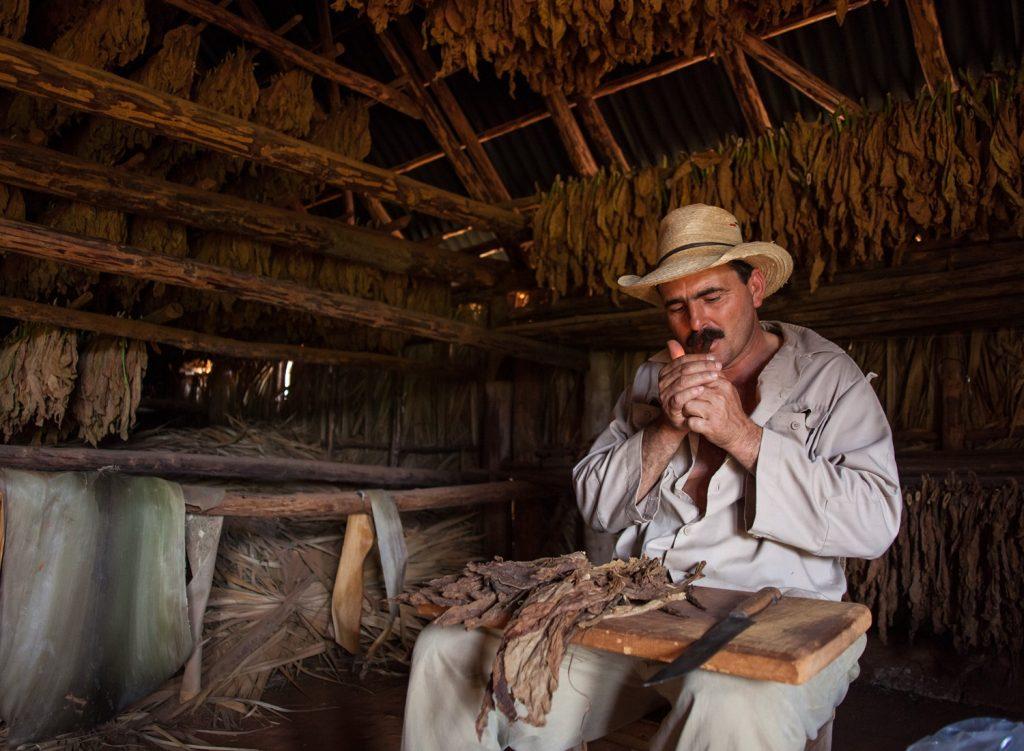 Cubain de la région de  Vinales qui cultive le tabac et fume un cigare dans son atelier.
