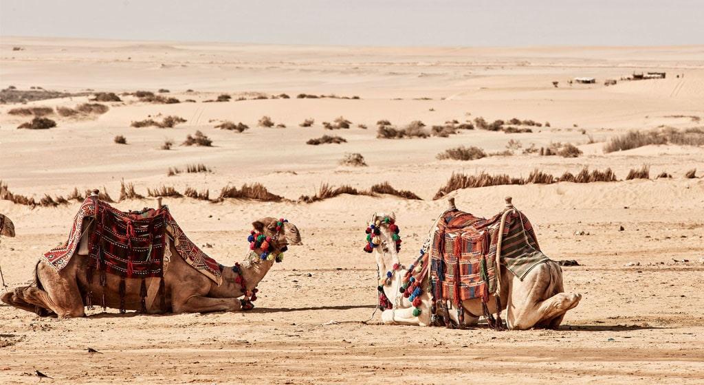 Partir en excursion en Egypte pour visiter le désert du Sahara .