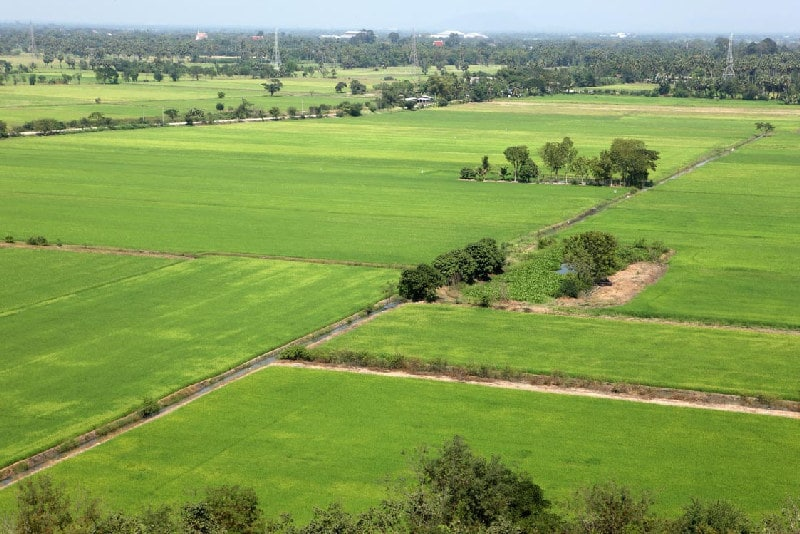 Vue aérienne d'une grande plaine à visiter en Thaïlande  .  Plantation de riz .