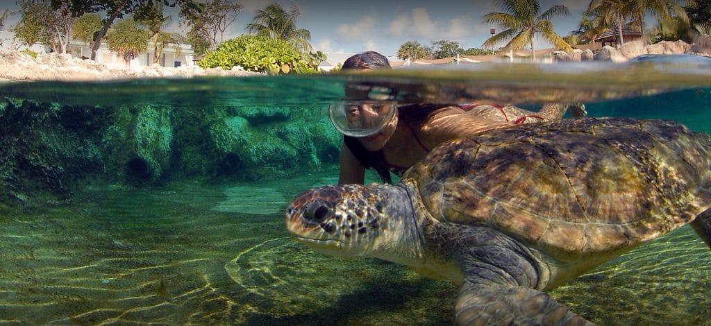 Cayman Turtle Farm à Gran Cayman
