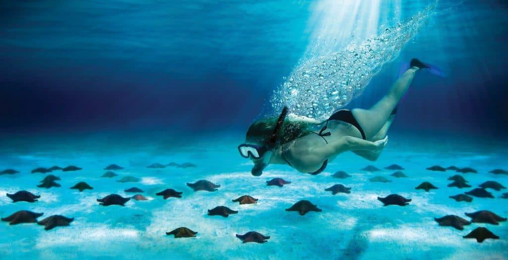 Croisière Caraïbes tout inclus aux îles Cozumel et excursion aquatique pour visiter les fonds marin et observer les étoiles de mer .