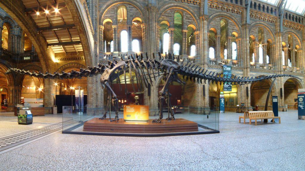 National History Museum : célèbre musée de Londres à visiter