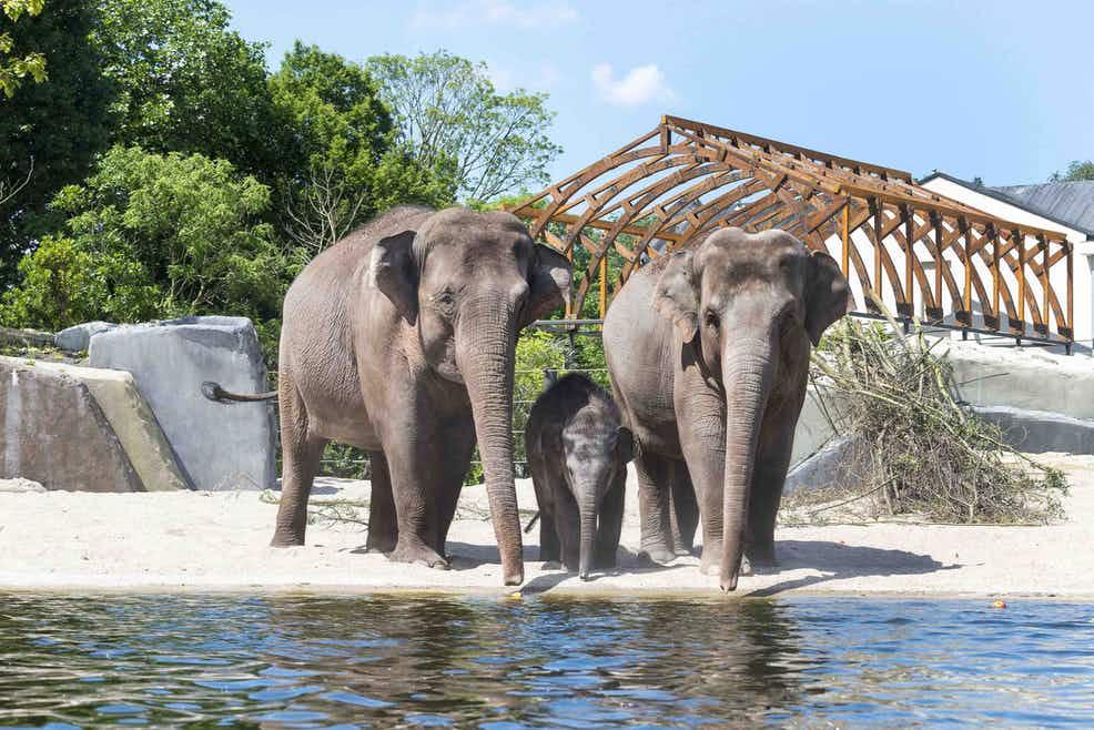 Artis Royal Zoo ceq u'il faut faire et voir à Amsterdam