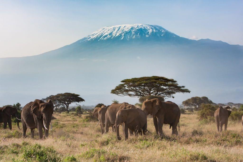 visiter la Tanzanie : Kilimanjaro le toit de l'Afrique .