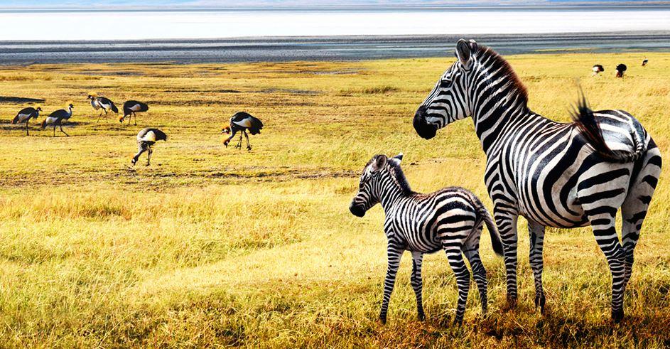 Savane Serengeti lieu de safari en Tanzanie