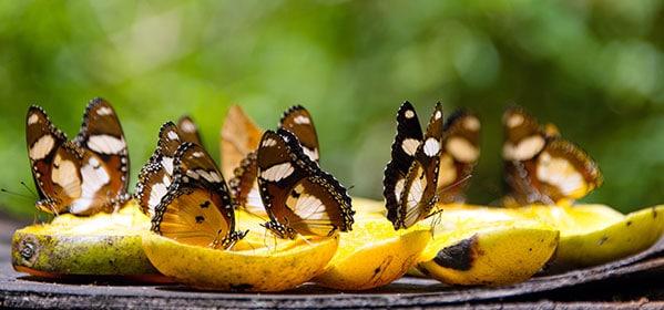 Papillons dans un centre naturel