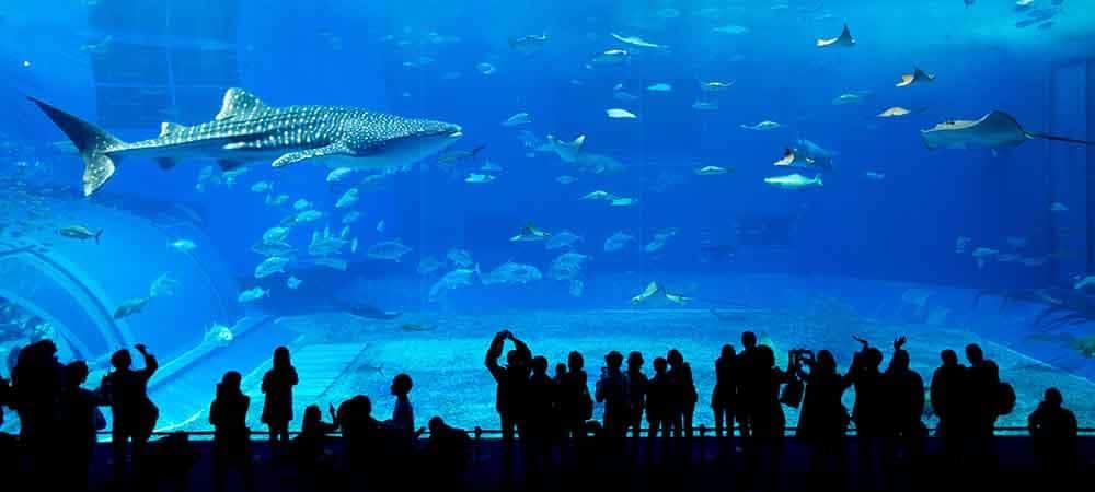 Dubai Mall Aquarium à voir lors de son voyage