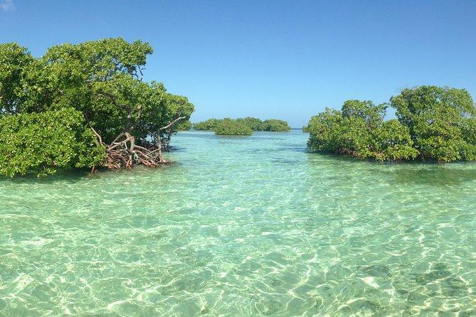 Mangrove en Guadeloupe : lieu à visiter en bateau