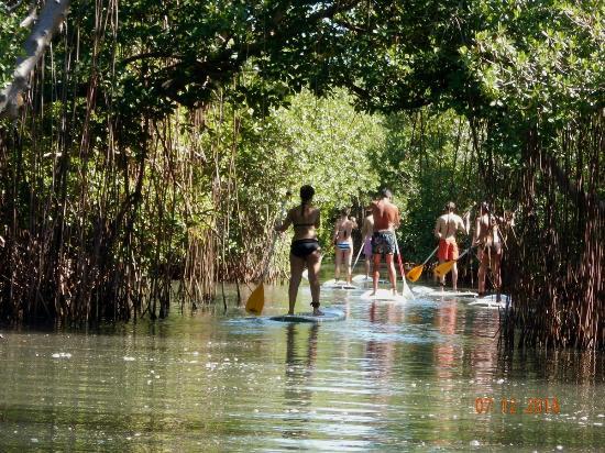visiter mangrove en Martinique