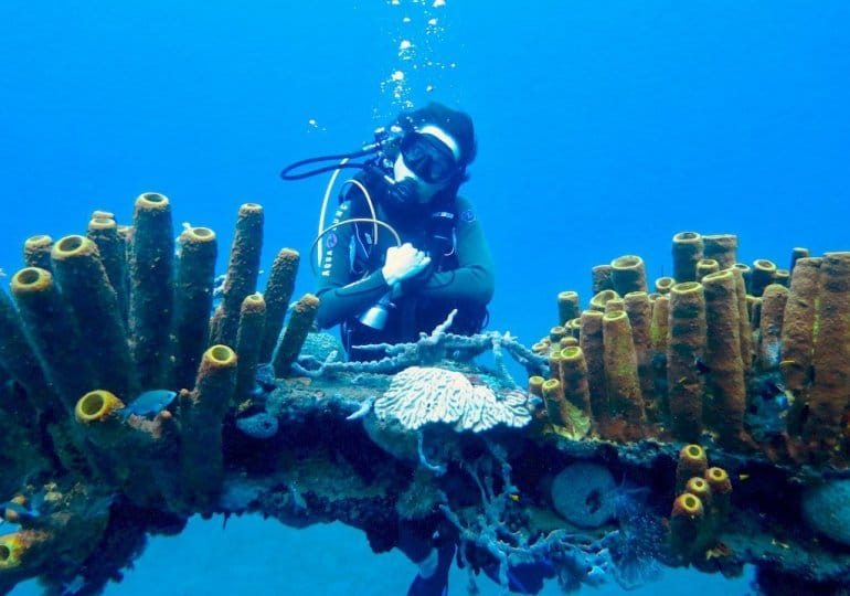 faire de la plongée sous marine en Guadeloupe à Bouillante : réserve Cousteau
