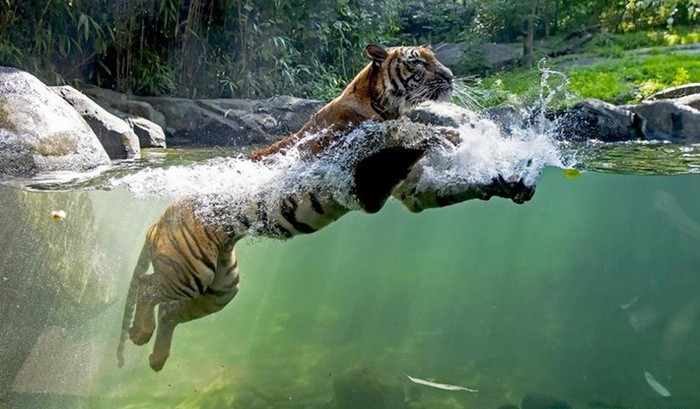 Aller au Zoo  du Bronx