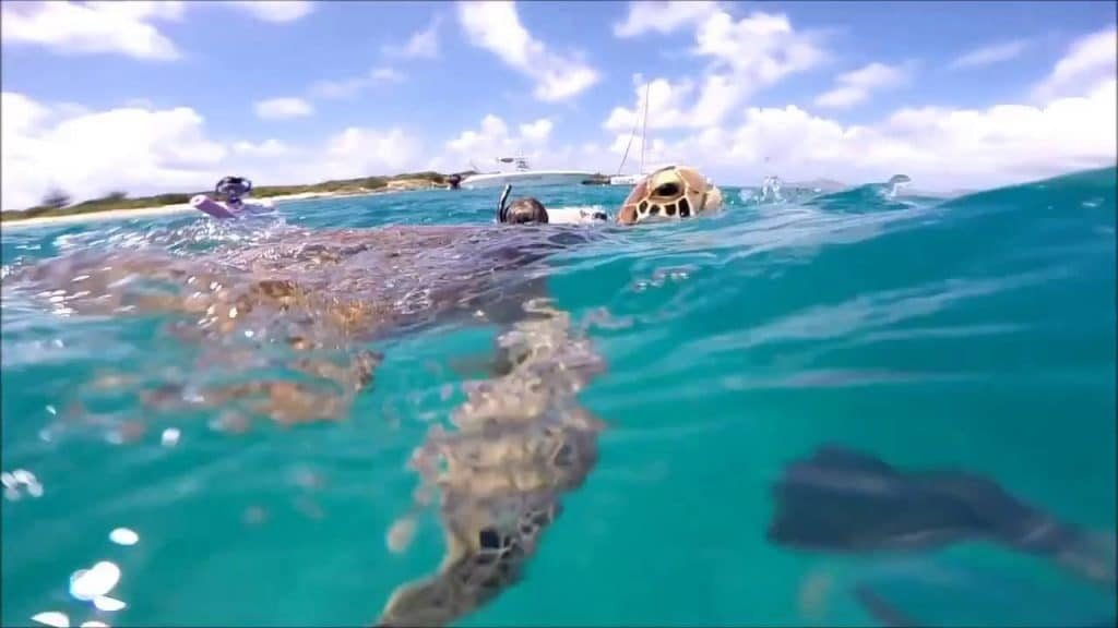 faire la plongée sous matine avec des tortues lors d'une excursion à saint Martin