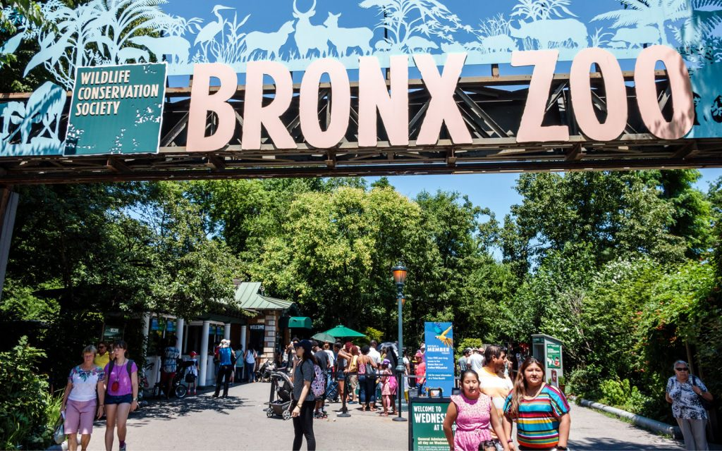 Que faire à New York : visiter le Zoo du Bronx