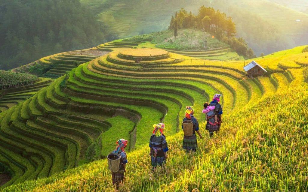Rizière au sud du Vietnam : bonne saison pour visiter la région