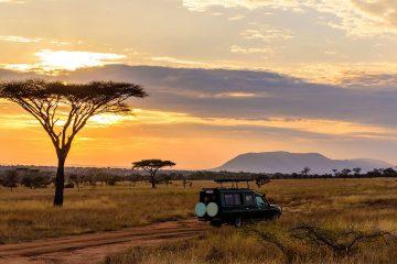 Quand partir en Afrique du sud : safari dans la savane
