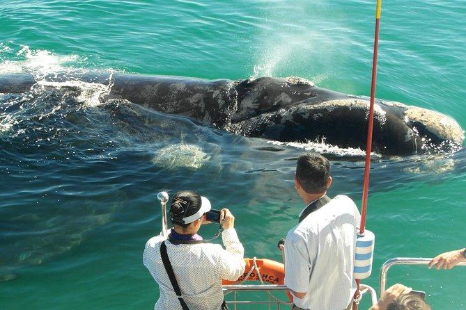 Observer les baleines à Hermanus