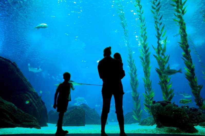 Aller à l'aquarium de Lisbonne pour observer les poisoons