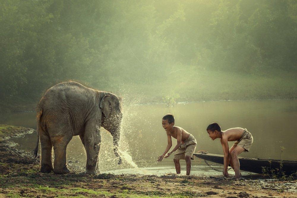 Saison sèche au Cambodge : enfants qui jouent avec un éléphanteau