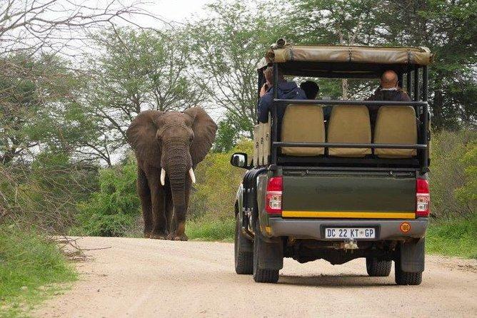 Visiter le plus garnd parc national d'Afrique du sud , le patrc national Kruger