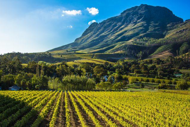 Visiter les vignobles d'Afrique du sud