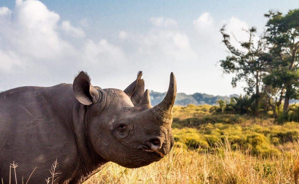Faire un safari en Afrique du sud à la réserve de Hluhluwe-Umfolozi