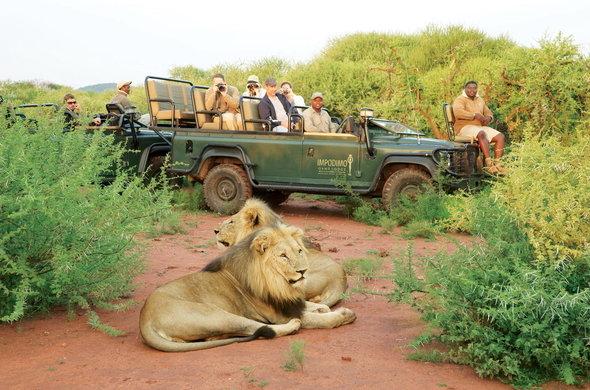 Faire un Safari à la Reserve Game Madikwe