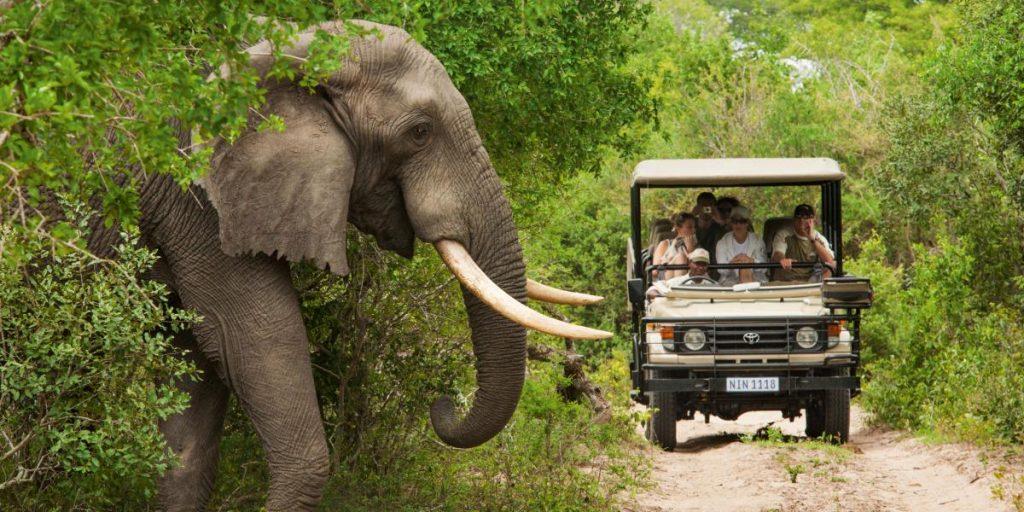 Quand partir faire un safari en Afrique du sud