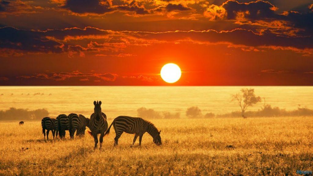 Paysage Afrique du sud : savane , faire du Safari