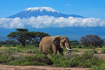 Faire un safari au Kilimanjaro , en Tanzanie