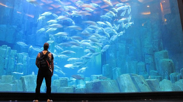 Aller à l'aquarium de Lyon