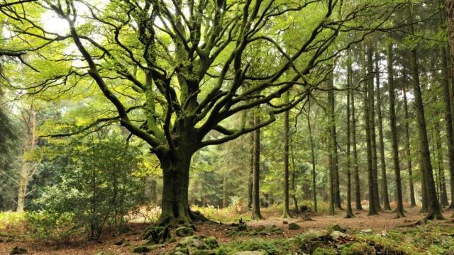 Forêt de Broceliande en Bretagne
