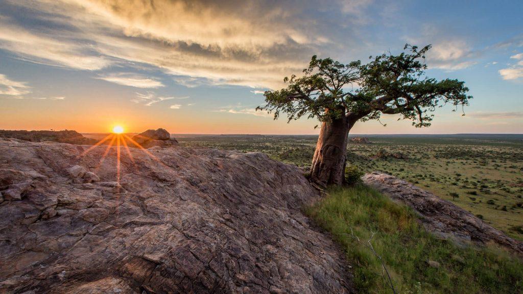 Baobab dans une réserve naturelle au Botswana en juillet
