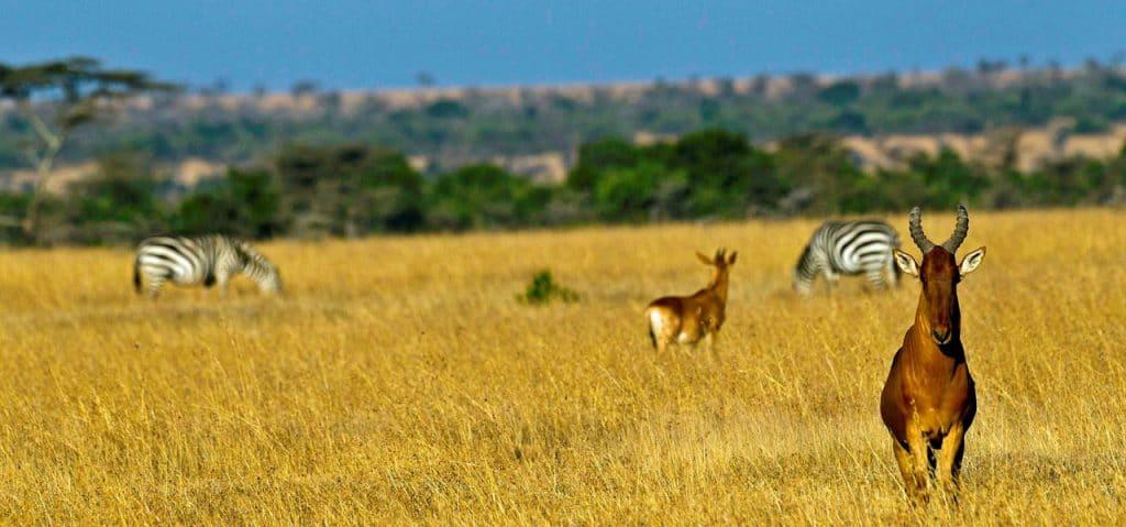 Aller au parc adernare au Kenay en octobre pour faire un safari