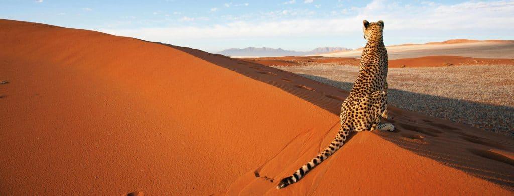 Aller en Namibie après les vacances d'été