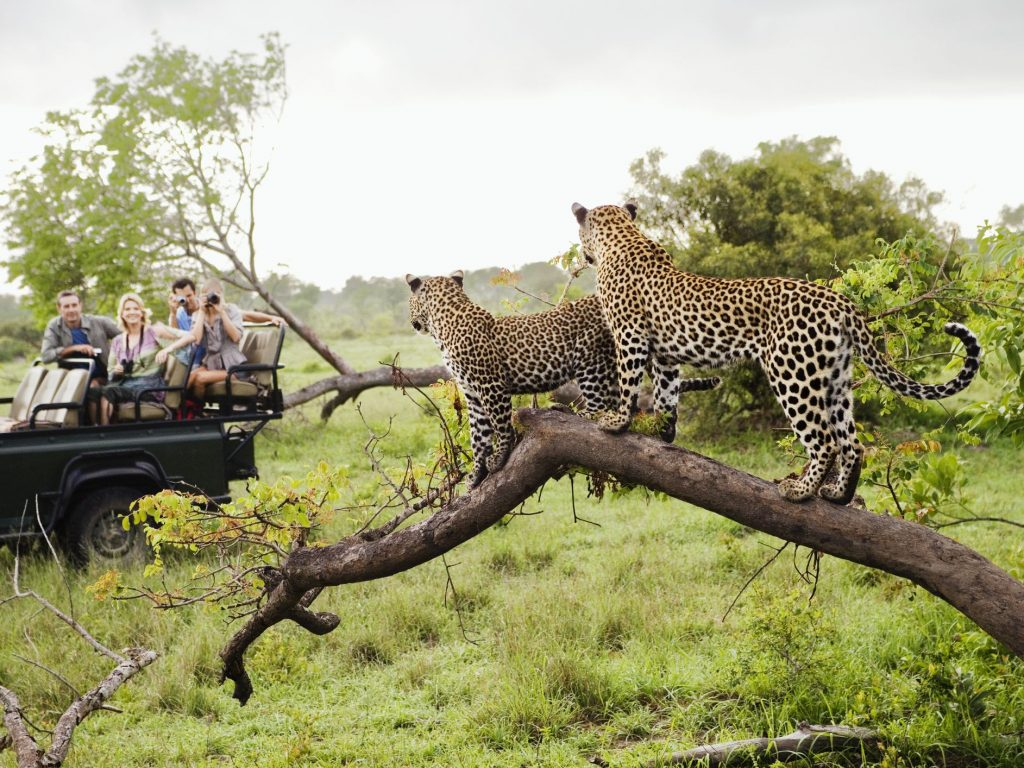 Partir en safari an Afrique du sud en décembre