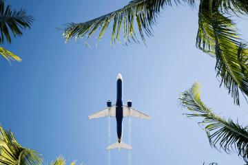 Vol Paris - Fort de France : avion vue d'en bas au milieu de branches de cocotiers