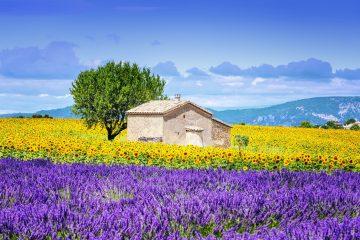 partir en vacances d'été en Provence