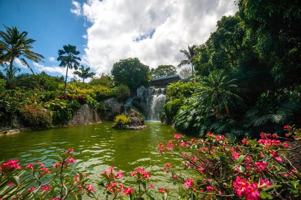 Aller au Jardin Botanique de Deshaies