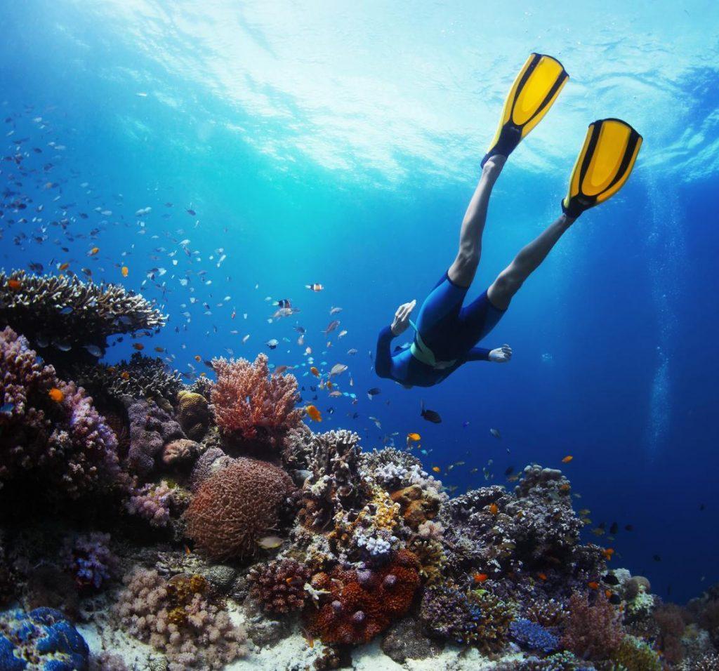 Faire de la plongée en Guadeloupe