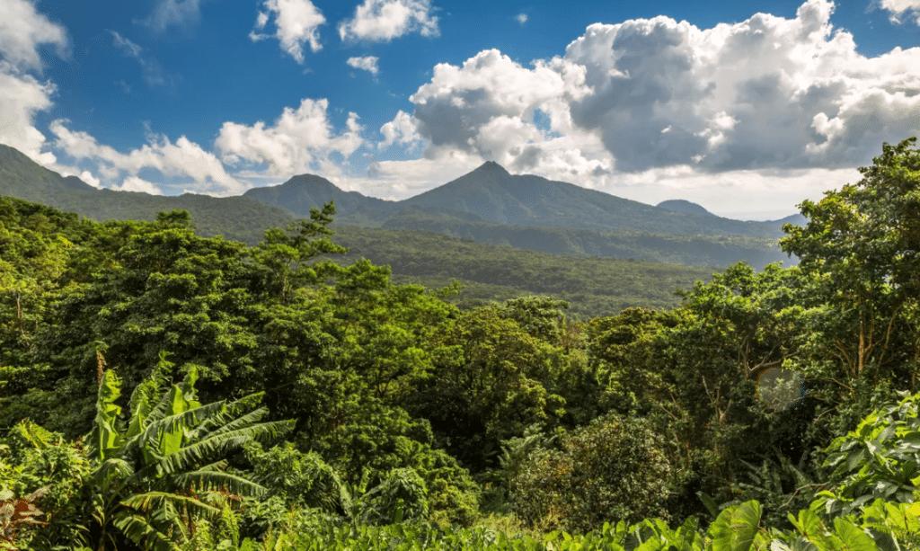 Faire de l'écotourisme à la Dominique