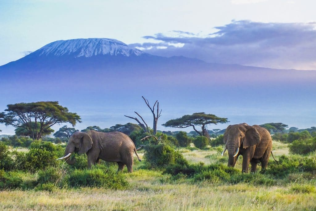 Mont Kilimanjaro en Tanzanie